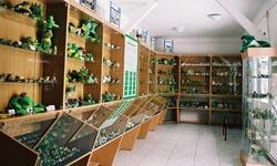 Muzeum Żaby - Kudowa-Zdój